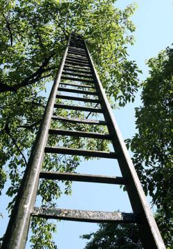 fruit-ladder